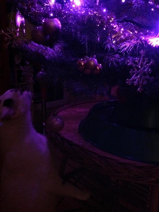 4_prezenty_pod_choinke_pomysly_na_choinke_ekologiczne_swieta_xmas_gifts_christmas_tree_ideas_green_and_ecological_holiday