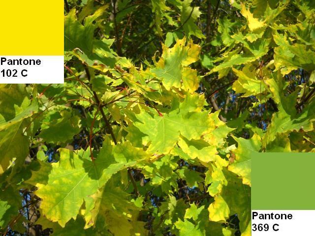 10 colors of the fall pantone palette kolory jesieni projektowanie wnetrz interio design inspiracje home decor ideas pomysly do domu