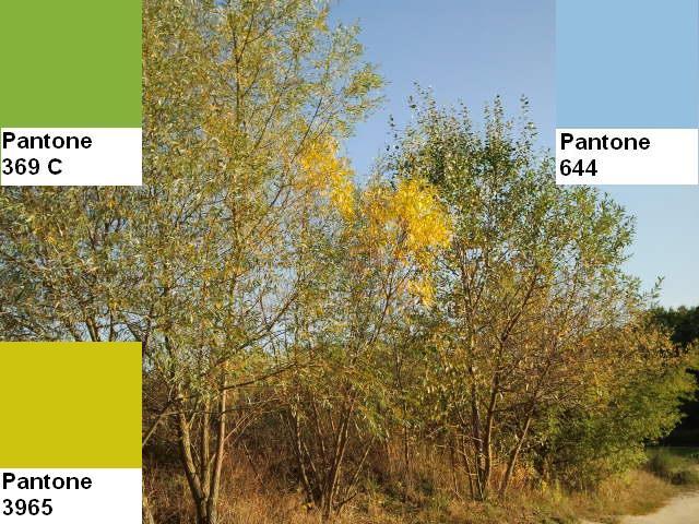14 colors of the fall pantone palette kolory jesieni projektowanie wnetrz interio design inspiracje home decor ideas pomysly do domu