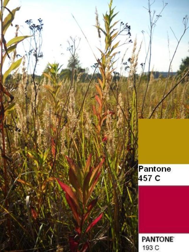 7 colors of the fall pantone palette kolory jesieni projektowanie wnetrz interio design inspiracje home decor ideas pomysly do domu