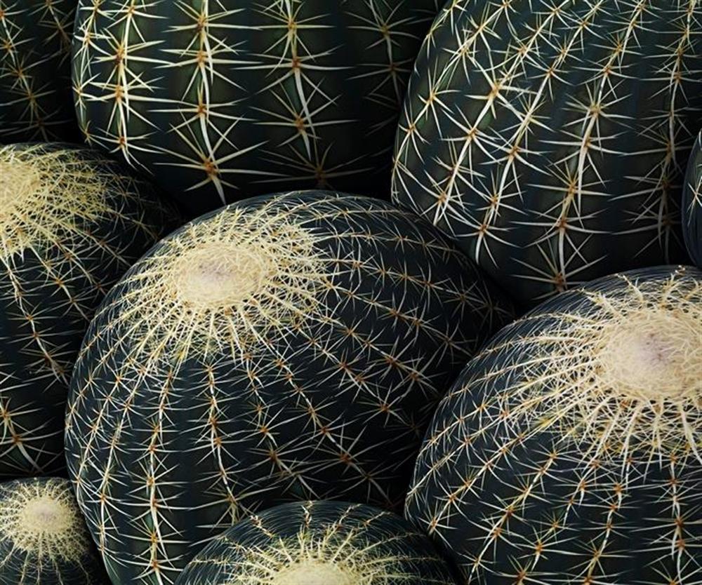 10 Canapé Cactus by_Maurizio_Galante_for_Cerruti_Baleri 2011 cactus inspired furniture design meble insirowane natura interior design home decor ideas pomysly do mieszkania rosliny