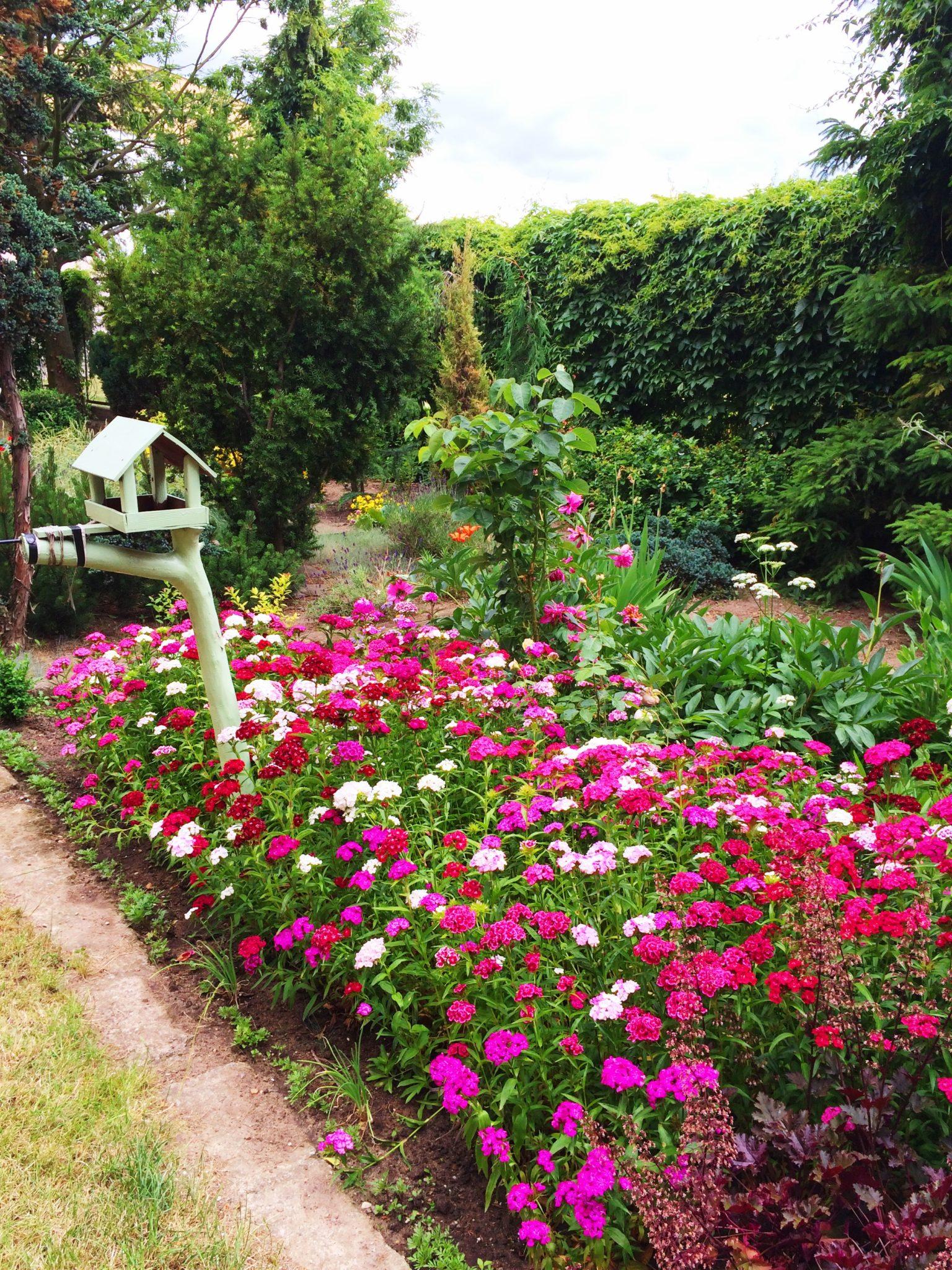 4 jysk metamorfozy projektowanie dekorowanie ogrodu garden party decorating ideas landscape design forelementspl jysk15lat jyskmetamorfozy