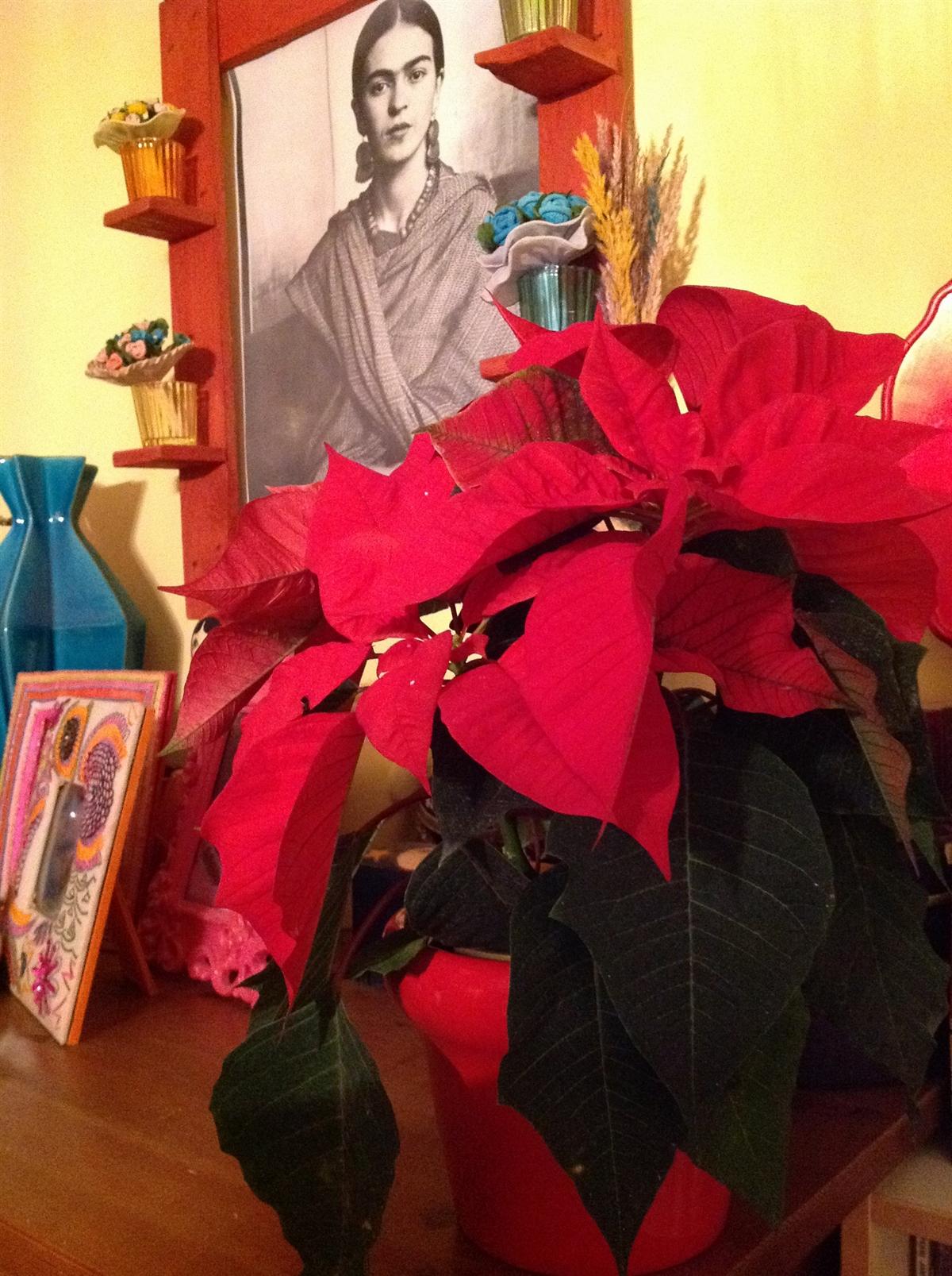 1c gwiazda_betlejemska_boze_narodzenie_wigilia_dekoracje_stol_na_swieta_pomysly_christmas_decorationg_ideas_home_decor_interio_design_holiday_table_setting_forelements_blog