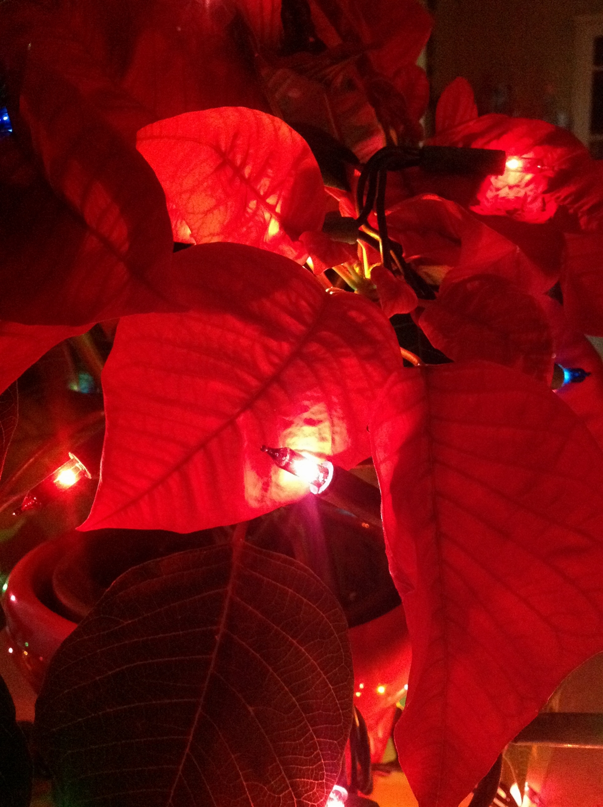 5 gwiazda_betlejemska_boze_narodzenie_wigilia_dekoracje_stol_na_swieta_pomysly_christmas_decorationg_ideas_home_decor_interio_design_holiday_table_setting_forelements_blog